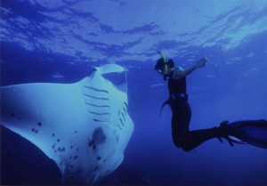 The quintessential diver and manta pic. This famous photo was taken by Manta's very own David Biddulph.