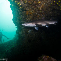 Spend a Weekend Away in Byron Bay – Julian Rocks is one of the Top 10 dive sites in Australia!
