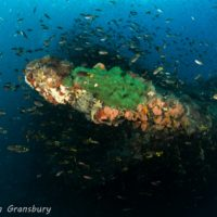 Dive Australia's Most Historic Shipwreck the SS Yongala!