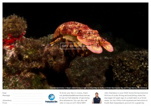 Professional Dive Services - Slipper Lobster