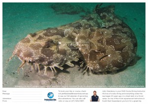 Professional Dive Services - Wobbegongs