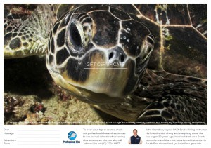 Professional Dive Services - Green Sea Turtle