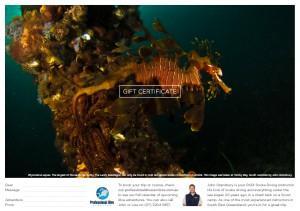 Professional Dive Services - Leafy Seadragon