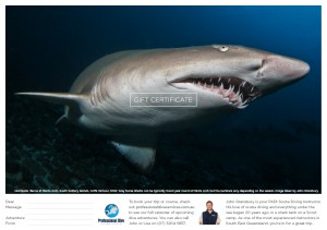 Professional Dive Services - Grey Nurse Shark