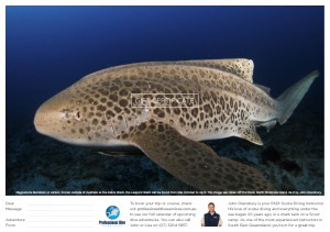 Professional Dive Services - Leopard Shark