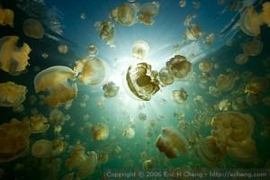 echeng-jellyfish-lake-palau