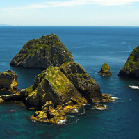DISCOVER The Sunken Secrets of New Zealand's North Island!!