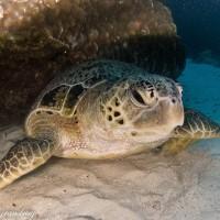Dive Flinders Reef – South East Queensland's Hidden Jewel!!