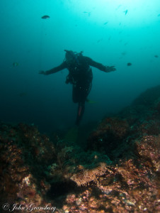 Diver with wobbegong shark, Fish Rock Cave, South West Rocks, NSW.