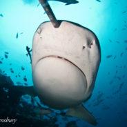 FIJI ISLANDS- Dive Beqa Lagoon