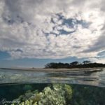 6 Lady Elliot Island_WP